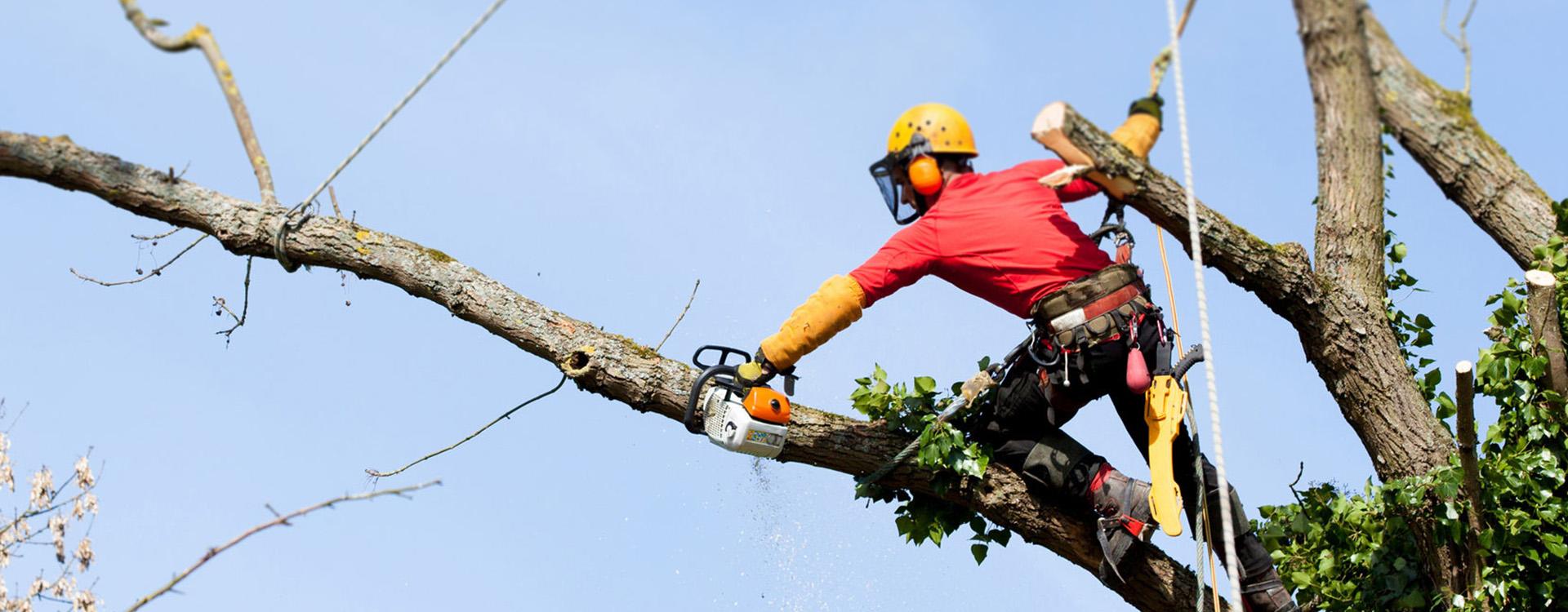 Pielęgnacja drzew –Wycinka metodą alpinistyczną
